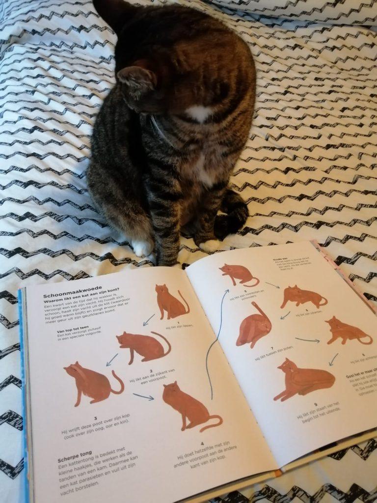 waarom klimt een kat in de gordijnen