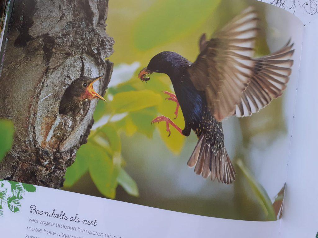de wonderen van het bos vogel