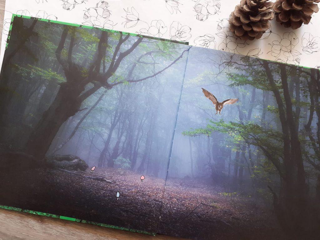 de wonderen van het bos pad
