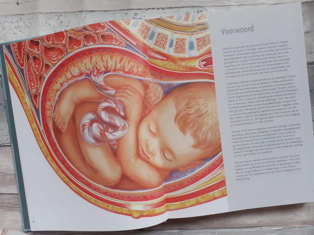 Anatomie van het menselijk lichaam voorwoord